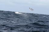 Dolphin (24).JPG