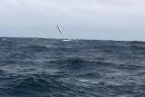 Dolphin (25).JPG