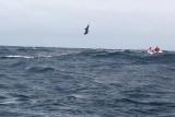 Dolphin (27).JPG