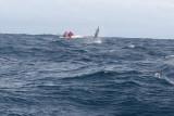 Dolphin (31).JPG