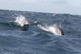 Dolphin (32).JPG