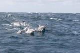 Dolphin (33).JPG