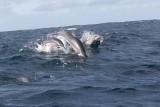 Dolphin (34).JPG