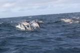 Dolphin (35).JPG