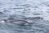 Dolphin (36).JPG