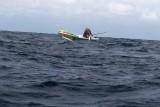 Dolphin (37).JPG