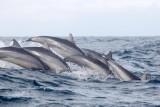 Dolphin (38).JPG