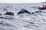 Dolphin (40).JPG
