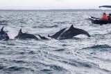 Dolphin (41).JPG
