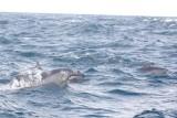 Dolphin (44).JPG