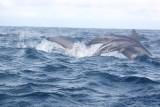 Dolphin (45).JPG