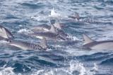 Dolphin (45.1).JPG