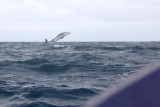 Dolphin (49).JPG