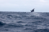 Dolphin (51).JPG