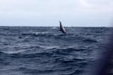 Dolphin (52).JPG