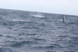 Dolphin (53).JPG