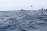 Dolphin (55).JPG