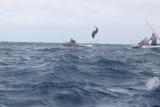 Dolphin (56).JPG