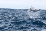 Dolphin (57).JPG