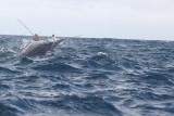 Dolphin (58).JPG