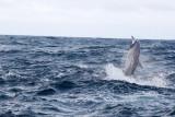 Dolphin (59).JPG