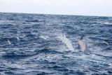 Dolphin (60).JPG