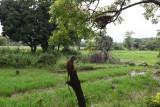 Sigiriya-067.jpg