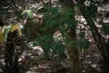 Leopard065.JPG