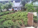 08 Ananthaazhwan Brindhaavanam.jpg