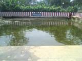20 Raamanuja Pushkarini.jpg
