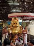 Perumal Kovil Brahmothsavam - Sri Perarulalan @ simha Vahanam Day1 Evening