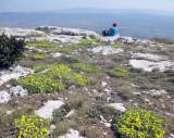 3St Victoire Provence- summit flowers