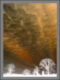 Weekly Galleries 2011