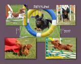 Schmidt 11x14 5-dogs