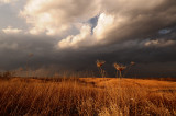 Prairie Grasses with Storms