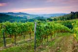 San Gimignano vineyards