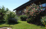 Our frontgarden with Rosa 'Bonica' and 'Mme. Plantier'