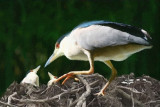 Checking the Nest by Bari - June 2011