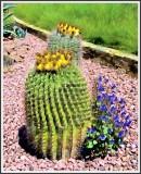 Southwest Cactus