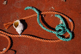 Gastropod and rope