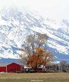 Red Barn and Teton