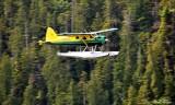 Green Hornet at Vernon Bay