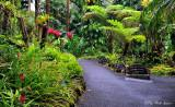 Orchid Garden, Hawaii Tropical Botanical Garden, Hawaii