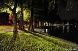 Cypress Trees, Lake Eola, Orlando, Florida