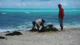 Picking up seaweed (1)