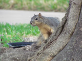 Damn Squirrel