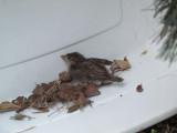 Paisley found a baby bird