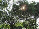 Sun poking thru tree