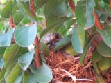 Baby bird getting bigger