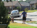Leon walking the dogs